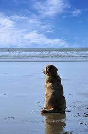 Cottages To Rent Dog Friendly by Pet Friendly Activities Coastal Cottages Ami