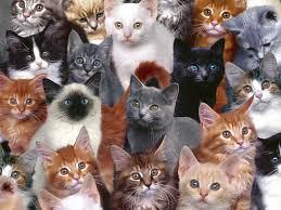 Η σταθερή καθημερινότητα κρατά τις γάτες μας υγιείς Images?q=tbn:ANd9GcTVoEMuN4qvIhKXJV8KVnypQ4vTOSftGfVJJavrbbkc2EvuXU7N