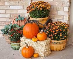Thanksgiving Pumpkin Decorating Ideas Best 25 Mums And Pumpkins Ideas On Pinterest Local Pumpkin
