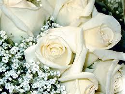 صور ورود بيضاء جميله جدا images?q=tbn:ANd9GcTXhs2ySwyvEXxYAv6MHh9Qb0IH9Joib05No0org3kjXNw2r02hhg