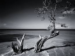 Wallpaper Black And White by Black And White Beach Wallpaper Wallpapersafari