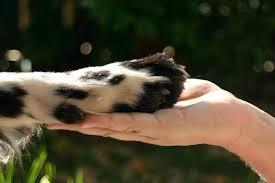 Projeto incentiva adoção de animais em Itajaí ( SC) através de ...