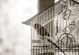 عصافيرررر images?q=tbn:ANd9GcT