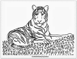 realistic animals coloring pages printable colorine net 6538