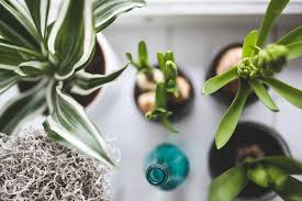5 of the best plants for your indoor garden
