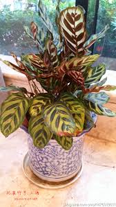 Office Desk Plants by Compare Prices On Office Desk Plants Online Shopping Buy Low
