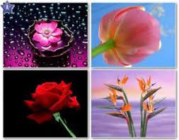 வால்பேப்பர்கள் ( flowers wallpapers ) 01 - Page 19 Images?q=tbn:ANd9GcT_hnIfS6m3qKoq47RjH34mMFb2F_TltUdqJu4iYs28OYwIkrVr
