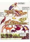 animales carnivoros herbivoros omnivoros y insectivoros