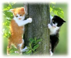 ELAKKAN Daripada Selalu Mencium Kucing