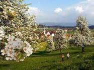 فصل الربيع Images?q=tbn:ANd9GcTbV0cq-19J-2fIvjDtSOF_WfY0lZqCAPHn1yChVs3Lbbcf2CI4vPOd56CP
