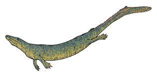 Dallasaurus