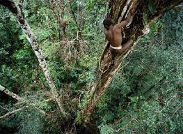 Diduga terlibat penyalahgunaan BBM dan illegal logging, Aiptu Labora Sitorus miliki aliran transaksi ratusan milyar