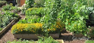 choosing the best position for your vegetable garden