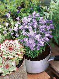 learn how to make flower containers at home hgtv