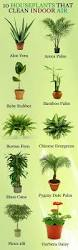 best 25 house plants for sale ideas on pinterest plant
