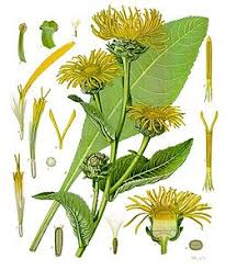 Glosario y propiedades mágicas de las plantas Images?q=tbn:ANd9GcTdXPm2sfBppFR8JZdfy89ESTy_eYWI82ZyYoOVZys5MYEBOIsU