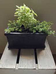 secrets to a thriving indoor herb garden