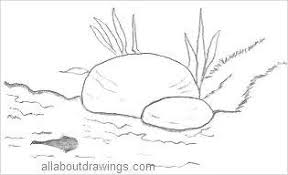 tadpole coloring page frog drawings in pencil