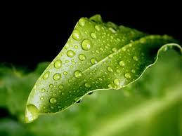 Volim zeleno - Page 2 Images?q=tbn:ANd9GcTfQip2RKv26kAQQoDp-2Ofl8r0b2RIvKiEk8UQuH5HVhvmytMqVQ&t=1