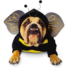 Dog Costumes Halloween 111 Pet Costumes Images Pet Costumes Animal