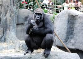 road trip chicago u0027s brookfield zoo