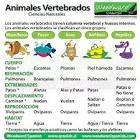 Animales <b>Vertebrados</b>