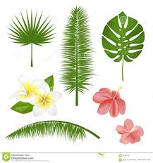 Flowers Plants by Set Of Exotic Tropical Flowers Plants Leaves Vector