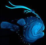 Exposição alemã mostra peixes de regiões abissais; veja