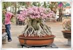 Bloggang.com : : ผู้เฒ่า บ้านบางแค : ภาพงานประกวดชวนชม จังหวัด ...