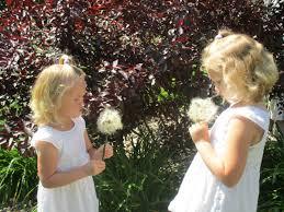 Floral Arrangement Supplies by Huge Dandelion Silk Flower Children U0027s Photo Prop 31