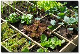 first vegetable garden ideas