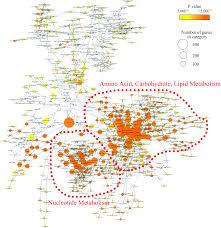 Harris JA   Benedict FG         A Biometric Study of Basal Metabolism in  Man  publication no       Washington  DC  Carnegie Institute of Washington