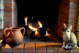 Como aquecer o bicho de estimação durante o inverno