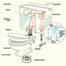 Kohler Toilet Seat Replacement Parts Toilet Parts Parts Of A Toiletparts Of A Toilet Family Handyman