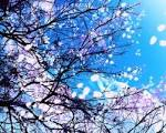 blue flowers - cynthia-selahblue (cynti19) Wallpaper (30569033 ...