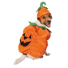 best halloween costume shops oh hello this is the best pumpkin costume ever earn 6 cashback
