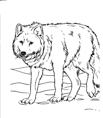 cow coloring pages for kids animal coloring pages of