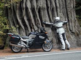 biker tree hugger