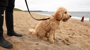 Cottages To Rent Dog Friendly by Dog Friendly Holiday Cottages National Trust