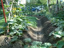 Manure For Vegetable Garden by Growing Your Own Vegetables Is A Good Idea At Organic Vegetable