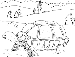 clipart coloring book desert tortoise