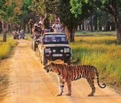 Jim-Corbett Tour Packages From Delhi| Corbett wildlife Tour From Delhi| wildlife Tours From Delhi| Corbett Tiger Safari Tour Packages. Carhireindelhi
