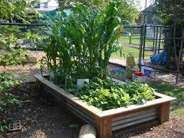 children u0027s vegetable gardens introduction natural learning