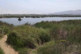 Pantanos de Villa Wildlife Refuge