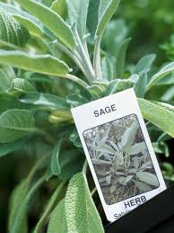 how to plant a kitchen herb garden hgtv