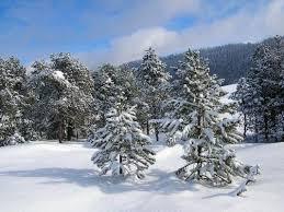 Promenons Nous Dans Les Bois... dans LimaceTrotteuse