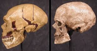 More people with Neanderthal qualities