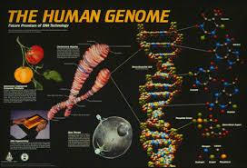 生物信息学相关文献书籍下载