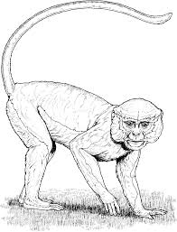 colobus monkey mandrill monkey eating leaves coloring pages