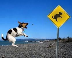 funny dog barking at road sign rat image